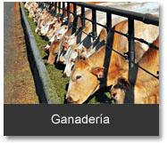 categoría ganadería